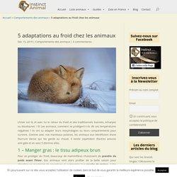 Comment les animaux s'adaptent-ils au froid en hiver ?