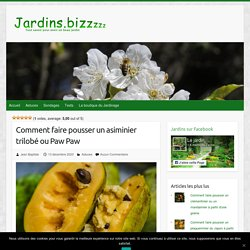 Comment faire pousser un asiminier trilobé ou Paw Paw – Jardins et potagers