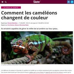 Comment les caméléons changent de couleur