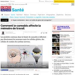 Comment le cannabis affecte la mémoire de travail - 7 mars 2012 - Sciences et Avenir