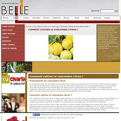 Comment cultiver le concombre citron ?