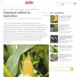 Comment cultiver le maïs doux, semer, planter le mais