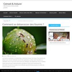 Comment se débarrasser des fourmis ? - Conseil & Astuce