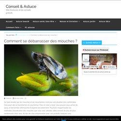 Comment se débarrasser des mouches ? - Conseil & Astuce