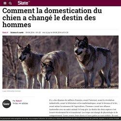 Comment la domestication du chien a changé le destin des hommes