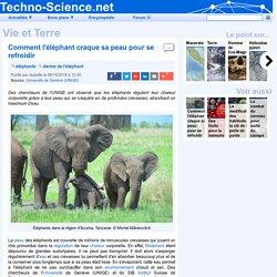 □ Comment l'éléphant craque sa peau pour se refroidir