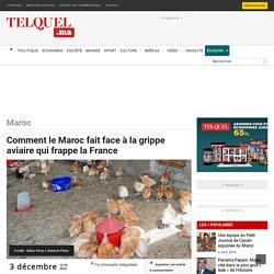 TEL QUEL 03/12/15 Comment le Maroc fait face à la grippe aviaire qui frappe la France
