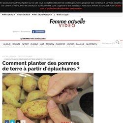 Comment planter des pommes de terre à partir d'épluchures ? - Fruits et légumes