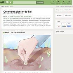 Comment planter de l'ail: 13 étapes (avec des photos)