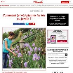 Comment (et où) planter les iris au jardin ?