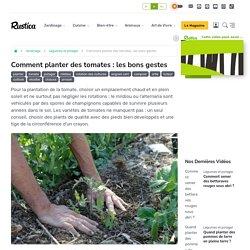 Comment planter des tomates : les bons gestes