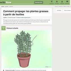 Comment propager les plantes grasses à partir de feuilles