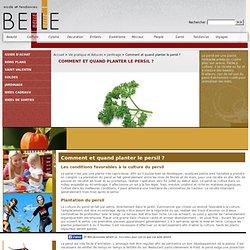 Comment et quand planter le persil ?