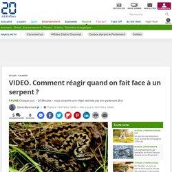 VIDEO. Comment réagir quand on fait face à un serpent ? Le 16 juillet 2020