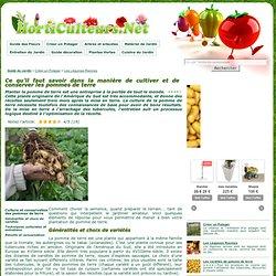Pomme de terre fruits l gumes pearltrees - Comment conserver des pommes de terre coupees ...