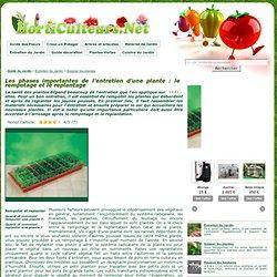Comment rempoter et replanter un végétal