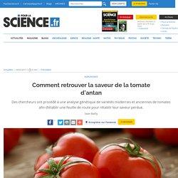 Comment retrouver la saveur de la tomate d'antan