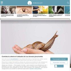 Comment sauver un escargot écrasé ?