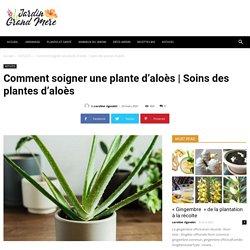 Comment soigner une plante d'aloès