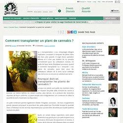 Comment transplanter un plant de cannabis ?