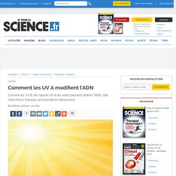 Comment les UV A modifient l'ADN