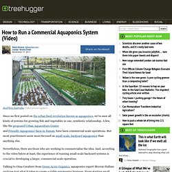 How to Run a Commercial Aquaponics System (Video)