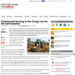 Commercial farming in the Congo not for the faint-hearted