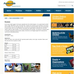 Poultry Research, Commercial & Scientific Poultry Information