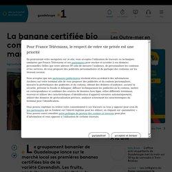 FRANCE INFO 19/03/21 GUADELOUPE - La banane certifiée bio commercialisée sur le marché local