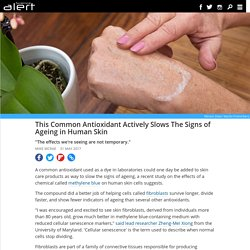 This common antioxidant actively slows the signs of ageing in human skin