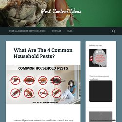 What Are The 4 Common Household Pests? – Pest Control Ideas