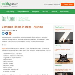 Common Illness in Dogs – Asthma