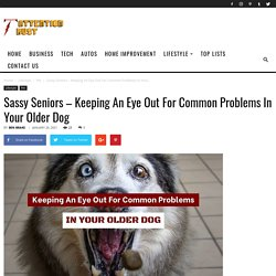 Common Problems In Your Older Dog