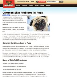 Common Skin Problems in Pugs - PugSpot