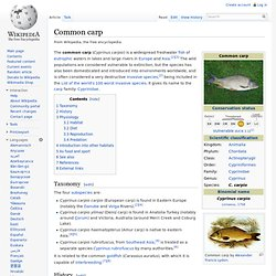 WIKIPEDIA - Common carp.