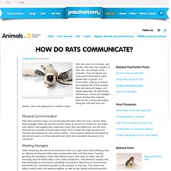 How Do Rats Communicate?
