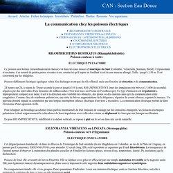 articles : La communication chez les poissons électriques