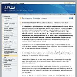 AFSCA 15/10/18 Détection de la bactérie Xylella fastidiosa dans une entreprise à Roeselare