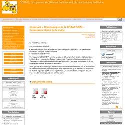 GDSA13 01/06/16 Important = Communiqué de la DRAAF-SRAL - flavescence dorée de la vigne