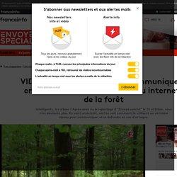 """Comment les arbres communiquent entre eux : découvrez le """"réseau internet"""" de la forêt"""
