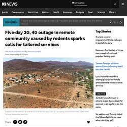 Five-day 3G, 4G outage in remote community caused by rodents sparks calls for tailored services