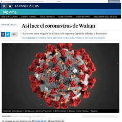 ¿Cómo es el coronavirus?