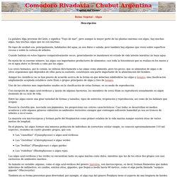Rivadavia; Reino Vegetal - Algas.