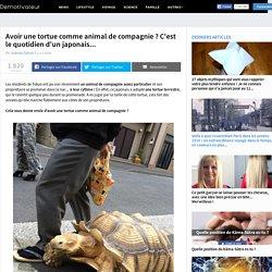 Avoir une tortue comme animal de compagnie ? C'est le quotidien d'un japonais...