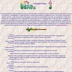Compagnonage des plantes - Insectes bénéfiques