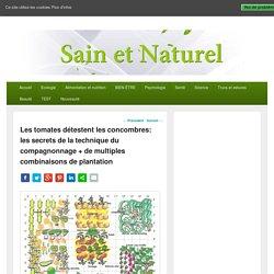 Les tomates détestent les concombres: les secrets de la technique du compagnonnage + de multiples combinaisons de plantation