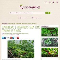 Companheiras e antagônicas: saiba como combinar as plantas