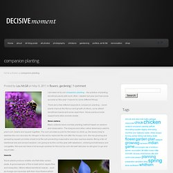 companion planting | decisive moments