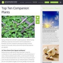 Top 10 Companion Plants