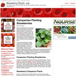 Companion Planting Strawberries